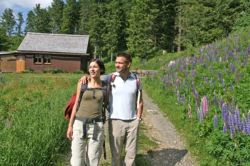 Wandern am Feldberg