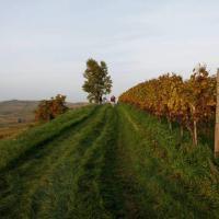 Wijnstokterras aan de Kaiserstuhl