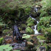 Vacances en forêt noire avec chien