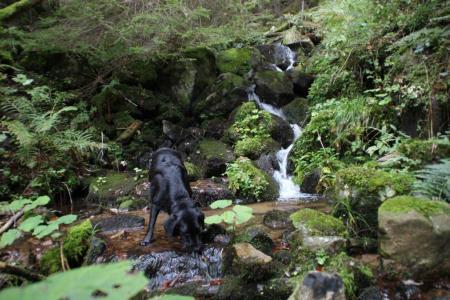 Schwarzwald-Urlaub mit Hund