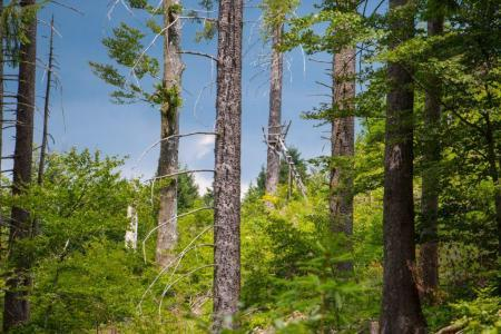 Forest bathing in the Black Forest