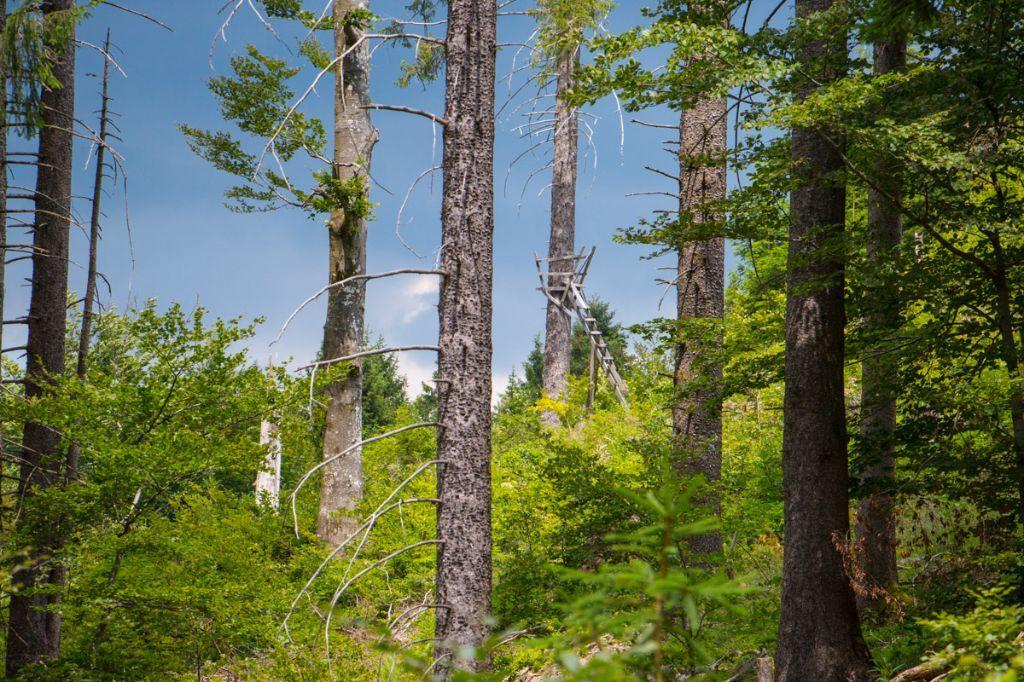 Waldbaden im Schwarzwald