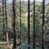 I coleotteri della corteccia causano il deperimento della foresta nella Foresta Nera