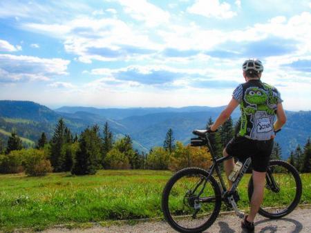 פנורמה של היער השחור לאורך שביל האופניים