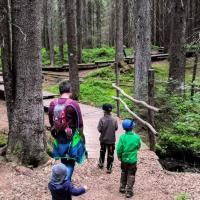 מסלולי טיול לילדים ביער השחור
