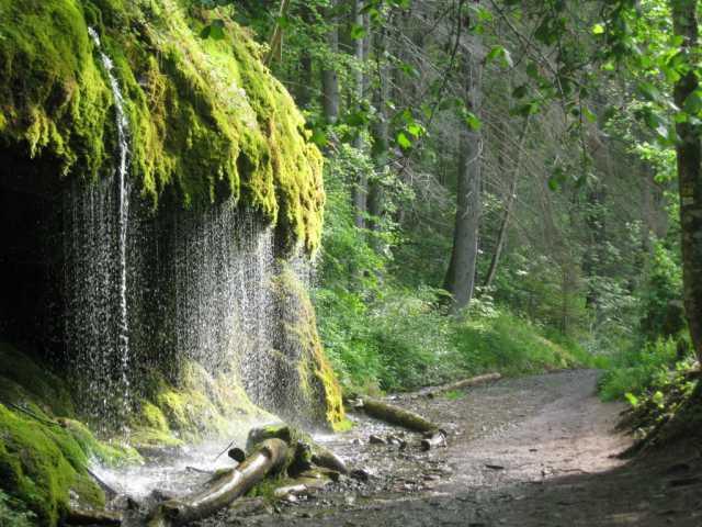 Die Wutachschlucht im Hochschwarzwald