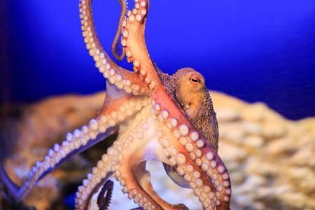 Осьминог в SEA LIFE