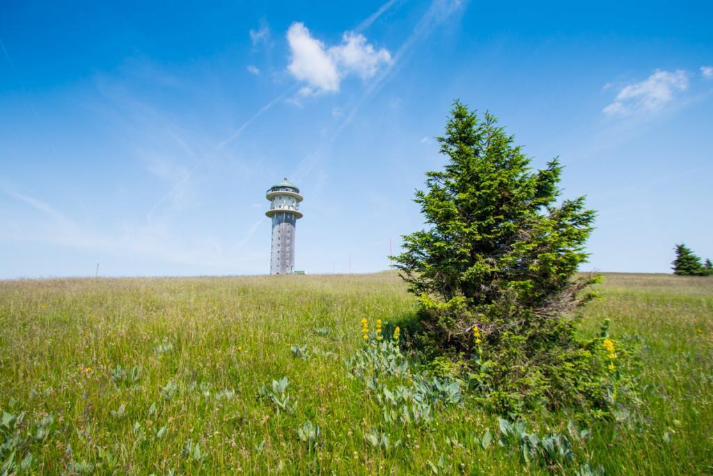 מגדל פלדברג
