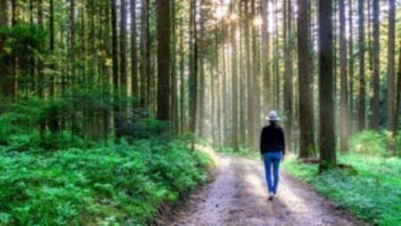 Abbildung 2: Sowohl im Schwarzwald als auch in Skandinavien gibt es viele Events in der freien Natur. Nur der Abenteuer-Charakter ist in Skandinavien etwas höher. Dort sind beispielsweise sogar Husky-Schlittenwanderungen möglich.