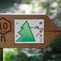 שביל הרפתקאות יער קנדרן