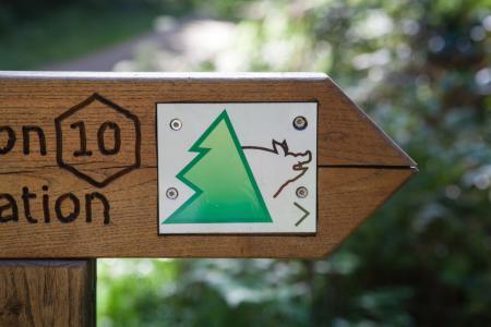 Sentiero avventura nella foresta di Kandern