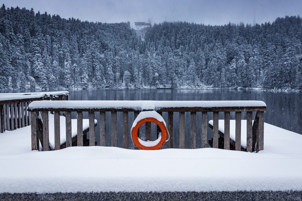 black forest, forest lake, winter
