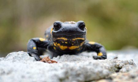 Salamanders op weg naar geluk