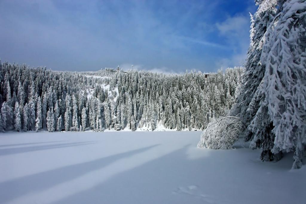 winter, snow, wintry