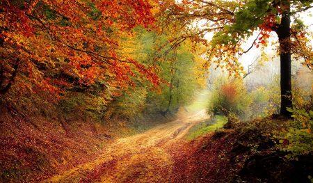 weg, bos, herfst